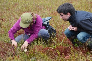 Rachel and Rich seeking sundew