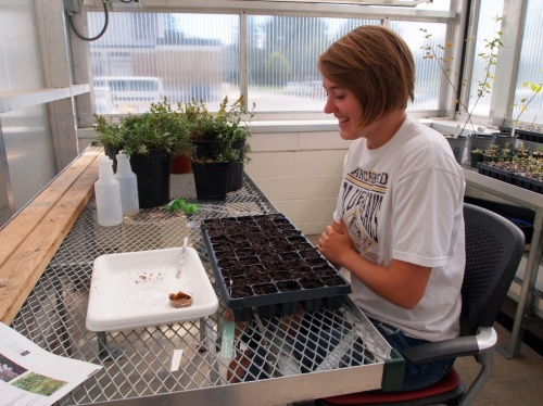 Kelly Archbold in the SUNY Plattsburgh greenhouse with the flat of soil collected from Whiteface and the seeds ready to be planted.