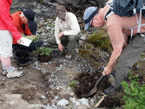 Figure 4. Morgan Judkins, Steve Young, Dan Spada, and Ray Curran (left to right) transplanting the alpine plants, bearberry willow and alpine goldenrod on Whiteface Mountain post construction.
